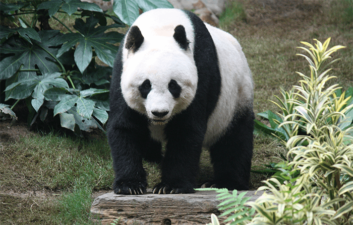 Recovering from Panda hit after High-Risk SEO